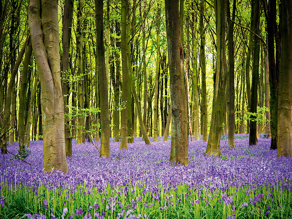 Investing in woodland carbon capture allows businesses to organically increase their sustainability efforts, rather than panicking at the last minute