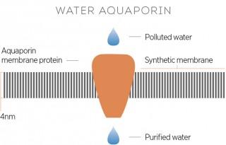 Water-aquaporin
