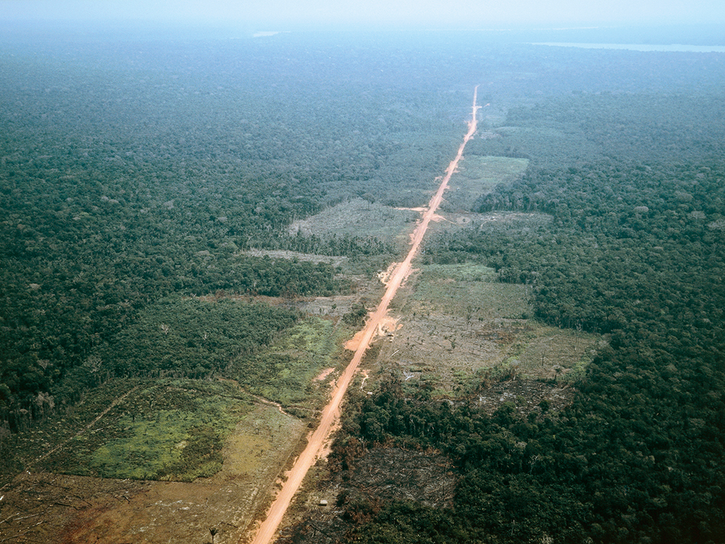 Fight Against Deforestation Must Speed Up The New Economy