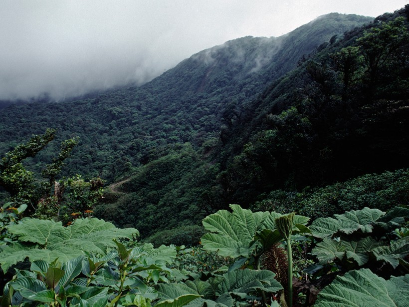 Costa Rica Runs Only On Renewable Energy The New Economy