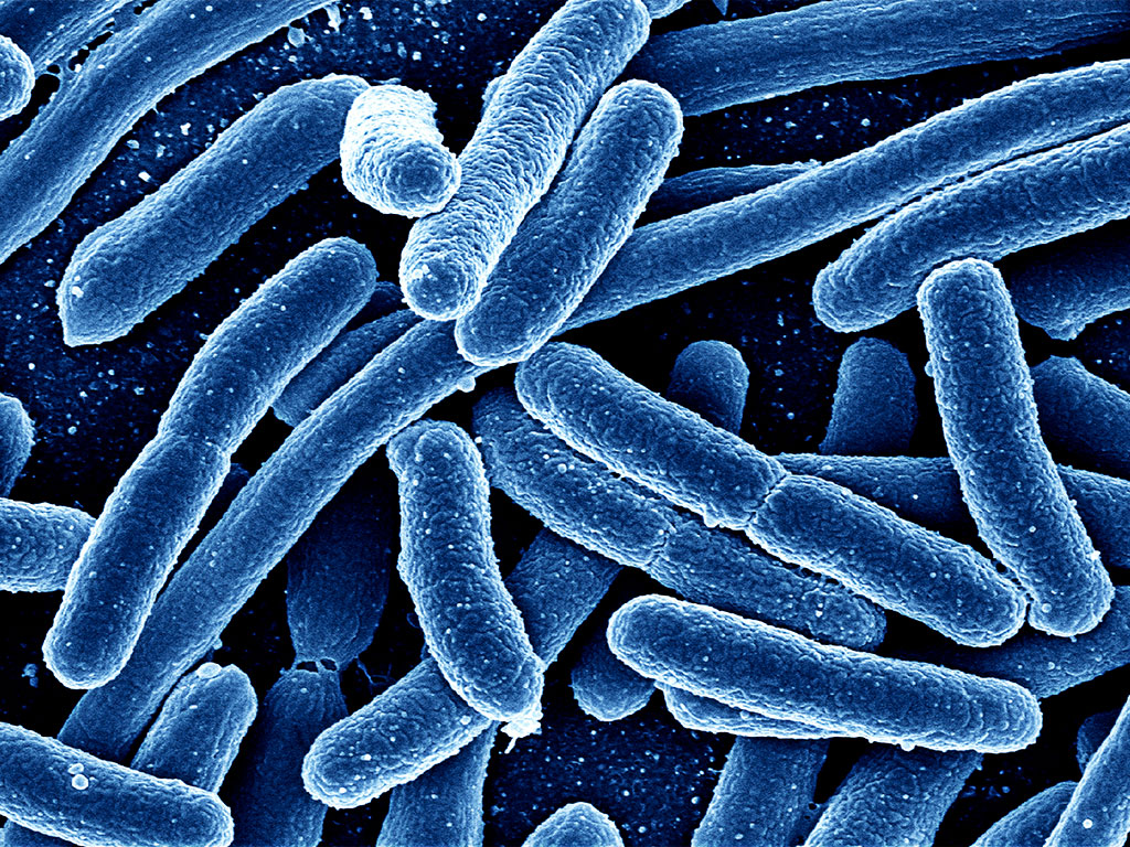 A new US-UK partnership of public and private bodies marks a global effort to tackle antibiotic resistance