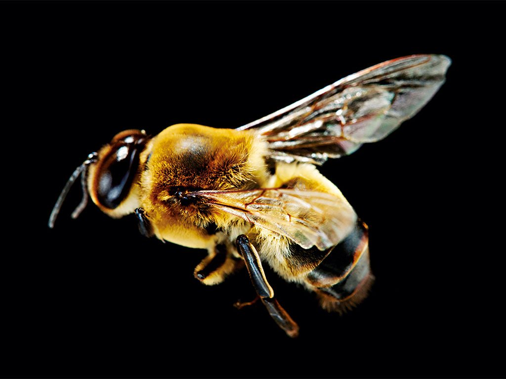 Bees are a vital pillar of our ecosystem. If we allow them to die out, the consequences for both the environment and the global economy will be cataclysmic