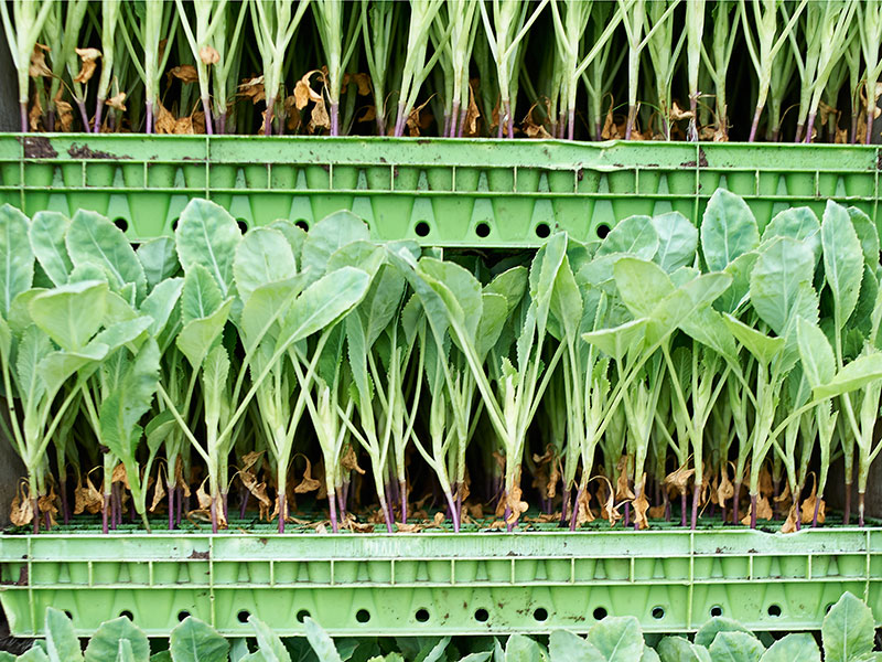 AeroFarms, one of the major players in the burgeoning vertical farming sector, will look to expand its produce portfolio after receiving significant investment in a Series E funding round led by IKEA's parent company